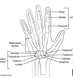 hand bones diagram [ 2048 x 1634 Pixel ]