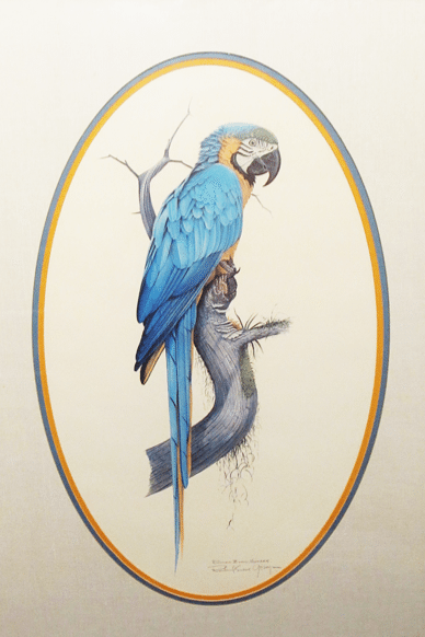 """Blue and Gold Macaw"" by Richard Evens Younger"