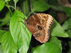 Take-a-pic-vlinders