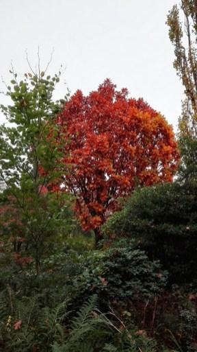 Arboretum-herfst-01