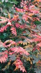 Arboretum-herfst-07
