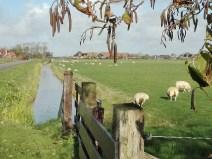 Texel-005