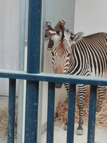 Antwerpen-dierentuin-005
