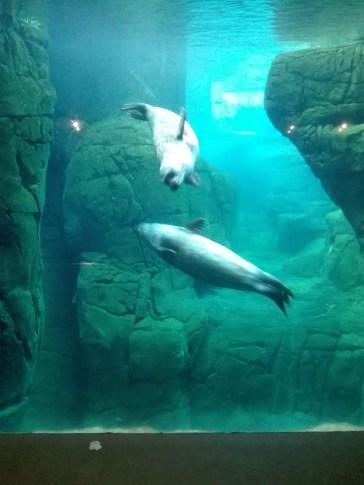 Antwerpen-dierentuin-007