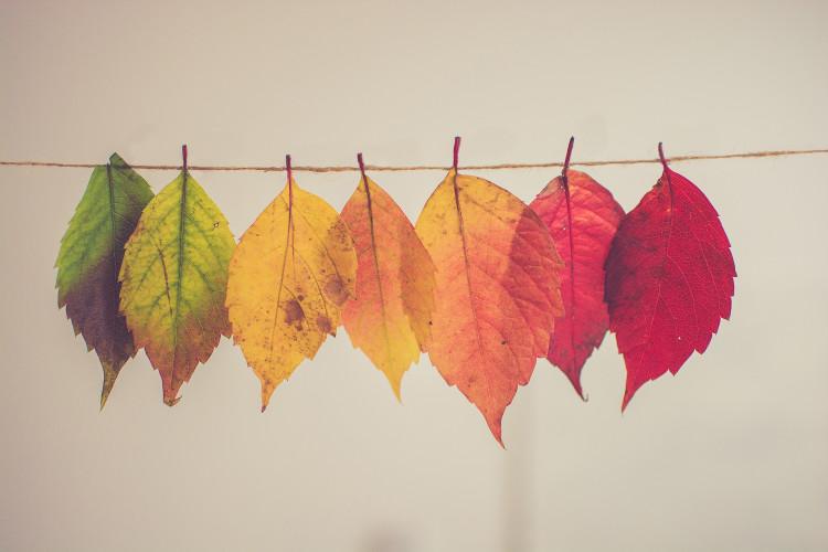 Friday 5: Seasons