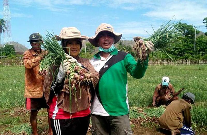 Kurangi Pasokan Sayur Dari Luar, Petani Hortikultura Lokal Diperkuat
