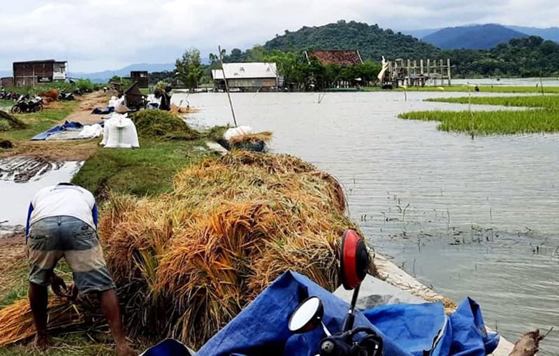 Petani Kelurahan Sampir Terancam Gagal Panen, Puluhan Hektar Sawah Terendam Banjir