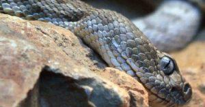 Snake Island جزيرة الثعابين من اخطر مناطق العالم