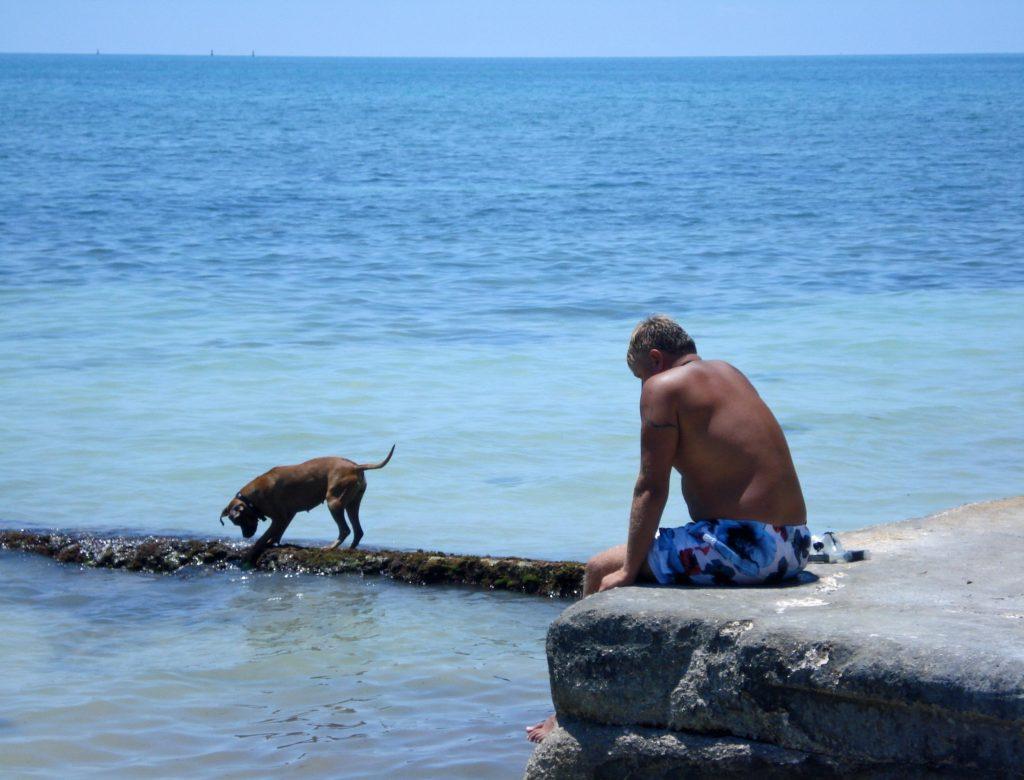 Should I Create A Pet Trust