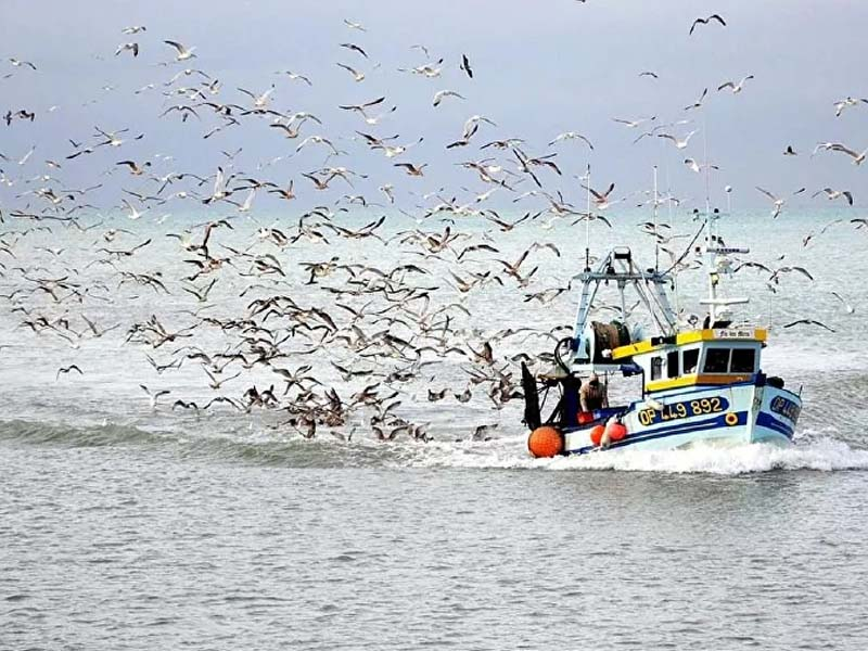 Denmark, Norway Lock Horns Over Fisheries in Post-Brexit Feud