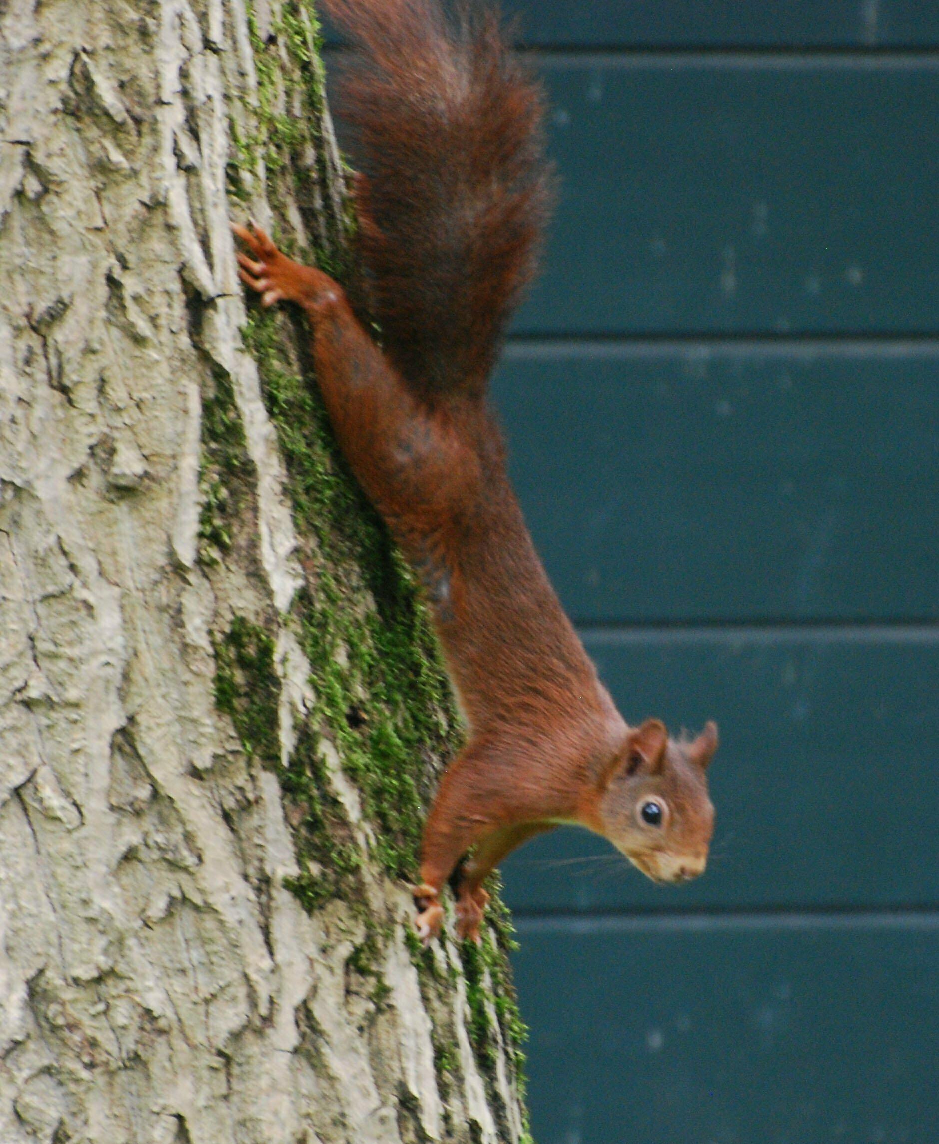 blokhut eekhoorn