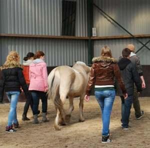therapie paarden kleine foto
