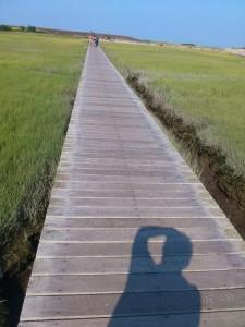 """Fast jede der Planken diese Boardwalks in SAndwich auf Cape Cod ist mit Namen und """"memories"""" beschriftet"""