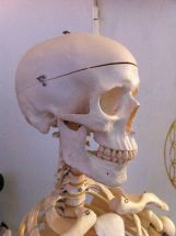 Cranio Sacral Therapy By Storebukkebruse