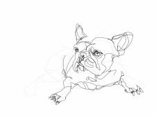 French Bulldog 02   Digital drawing, print available A4