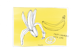 From Canaries with Banana Love | digital drawing