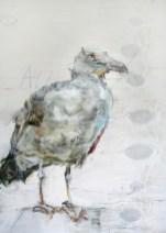 Seagull on wood