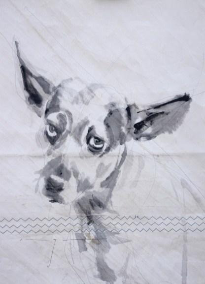 koetziervanhooff-dog-sail-k10d