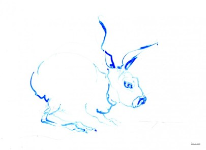 Bue Rabbit | Ink drawing on paper | A3