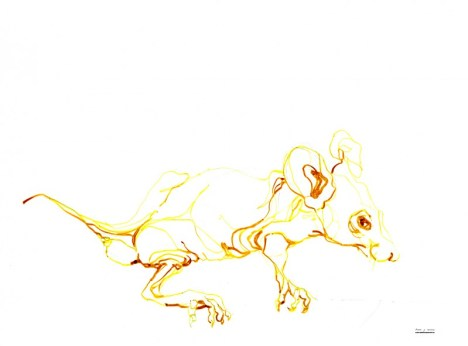Yellow Mouse   Ink drawing on paper   A3