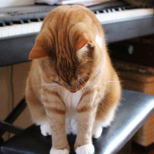 kat hård mave