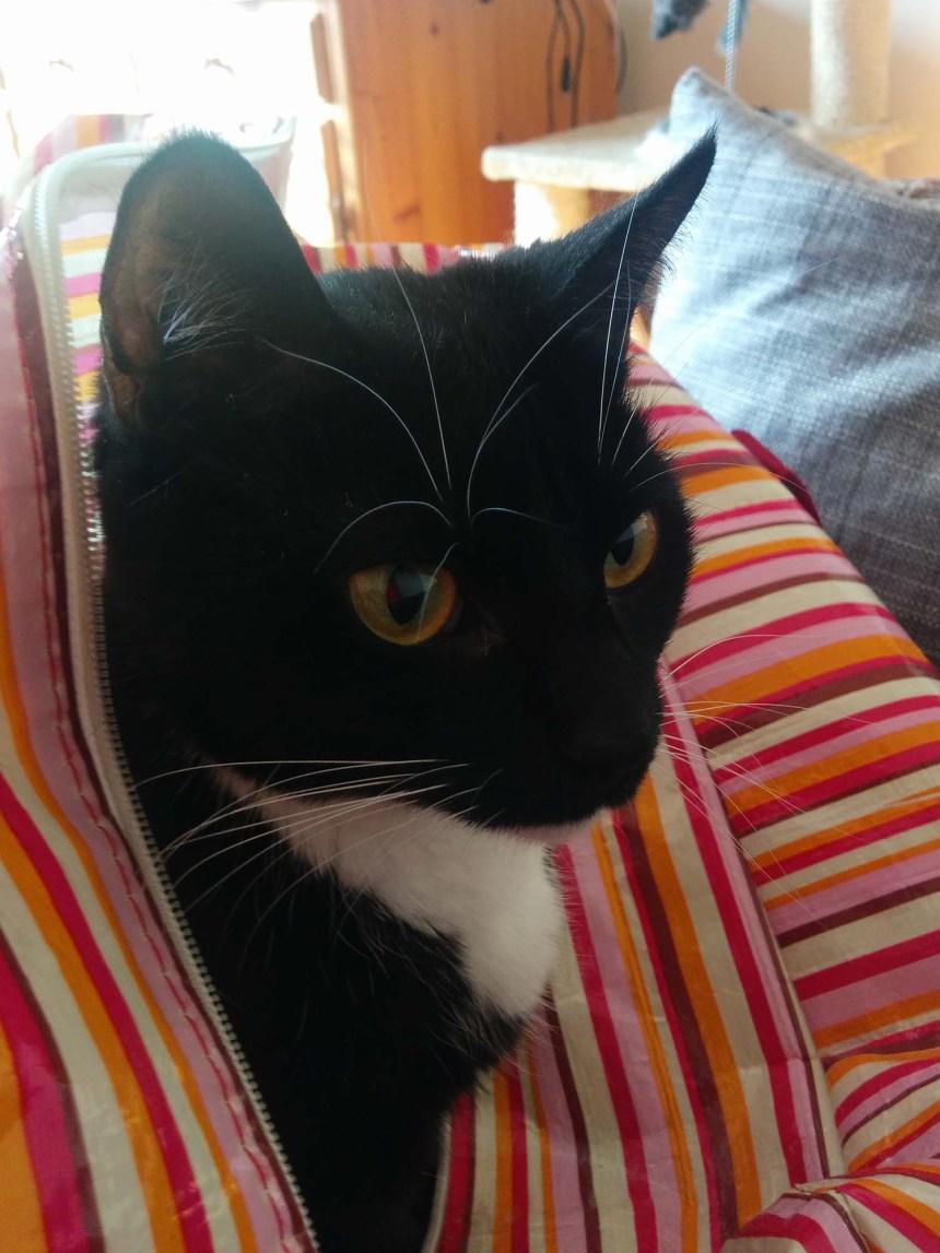 Kattelegetøj_Fie i indkøbsnet