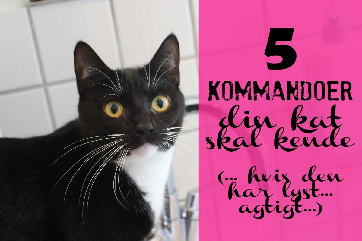 5 kommandoer din kat skal kende (hvis den har lyst... agtigt...)