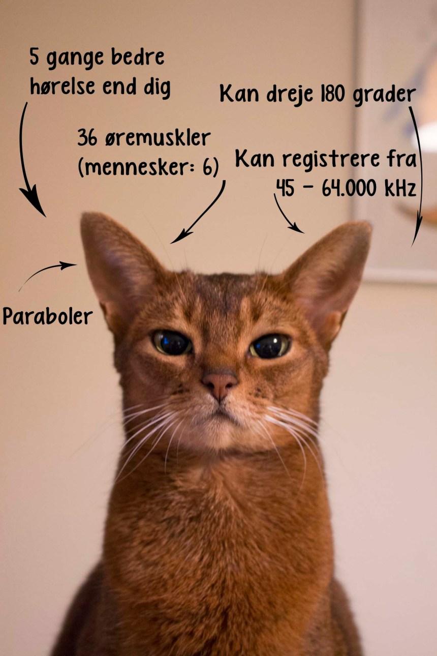 5 ting der stresser din kat_kats hørelse