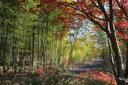ネーブルパークの竹林