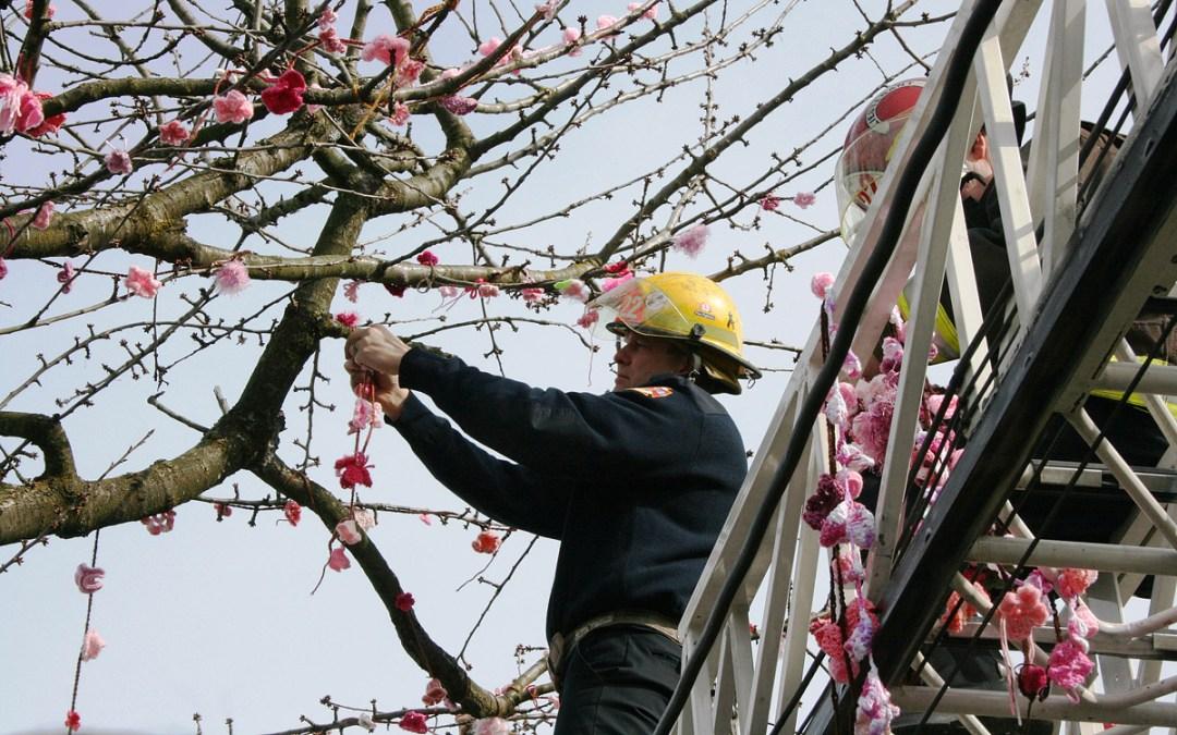 Yarn Bombing of Kogawa Cherry Tree, photo by Heather Kaiser