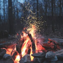 crackling camping fire in forested location