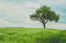 Rolling hills, grassy field, and a tree