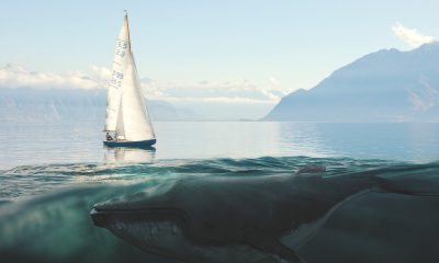 Why Coinbase, Ripple and other crypto whales moved 365.7 million XRP