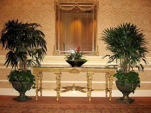 Resort Hotel in Las Vegas with beautiful paired plantings of Rhapis Palms grown by Kohala Nursery