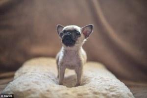 Il piccolo cane è nato conuna fenditura al labbro, i veterinari sospettano che potrà avere difficoltà nel crescere