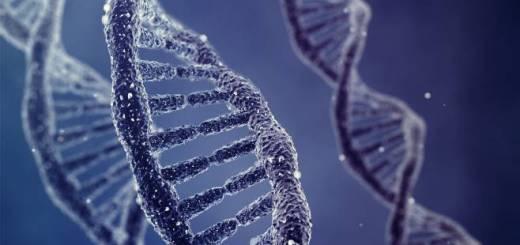 Dna, geni sopravvivono alla morte e si riattivano alcuni giorni dopo