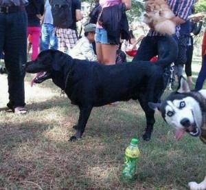 concorso di bellezza per cani