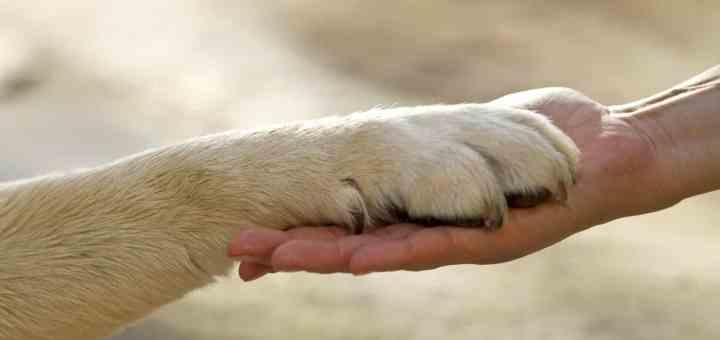 Animali domestici un valido aiuto per chi ha malattie mentali