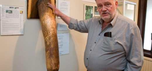 museo del pene fondato da Sigurður Hjartarson Misure del pene, in aumento le richieste di correzione dei genitali, vedi le STATISTICHE delle dimensioni del pene