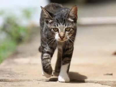Gatto torna a casa dopo aver percorso140 chilometri