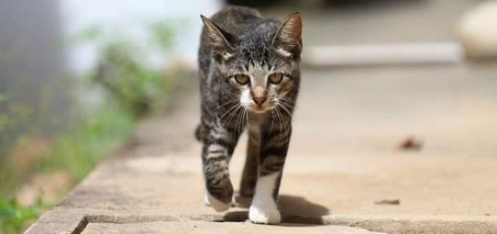 Anche i gatti sanno tornare a casa da lunghe distanze. La storia di Ogghy