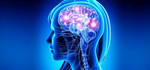 Personalità dipende dalla forma del cervello