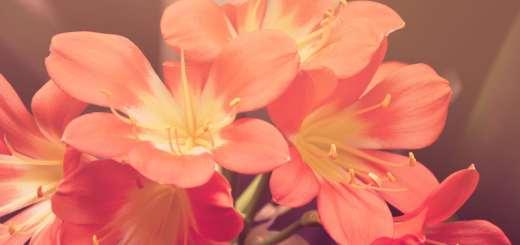 Fiori per un appuntamento romantico: consigli utili