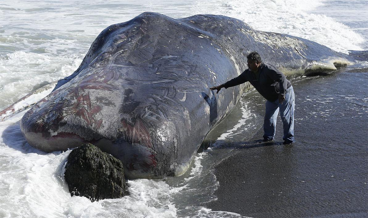 Whale Carcass_145224