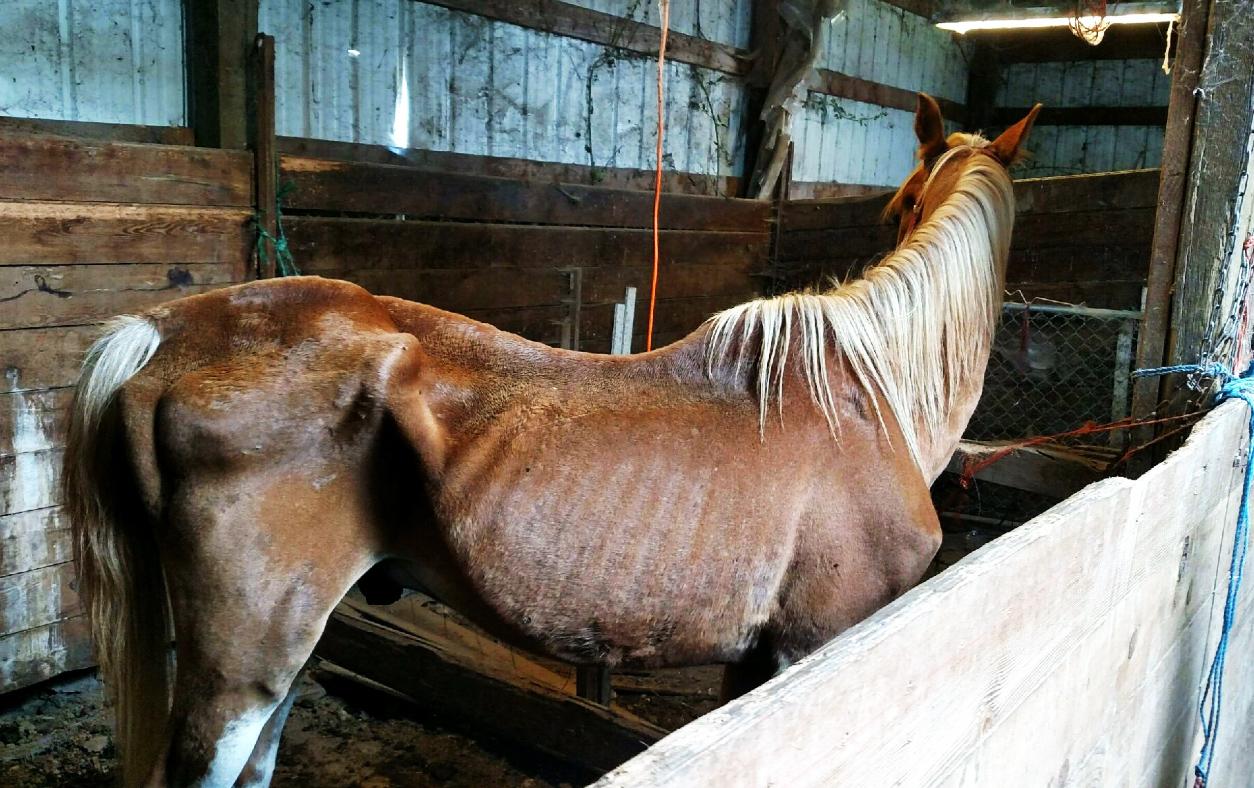 doug the horse_337602