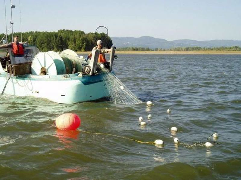 Commercial fishermen use a gillnet on the Columbia River. A fund set up by the Oregon Legislature intended to help commercial fishermen transit_477304