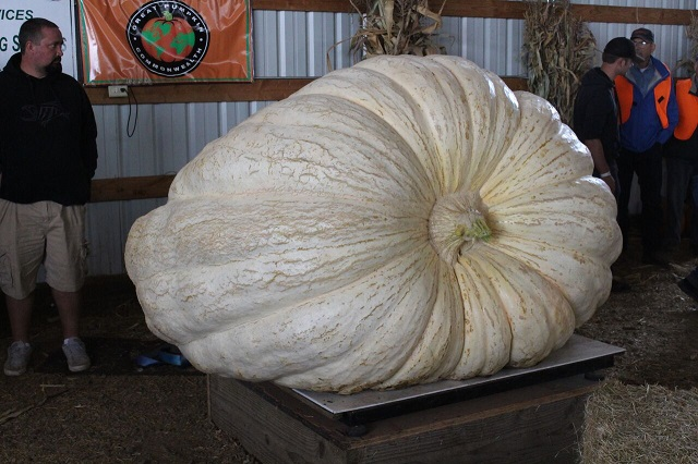 steve daletas pumpkin a 10062018_1538920218184.jpg.jpg