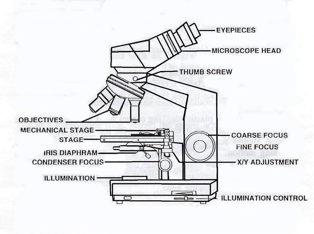 parts of a compound light microscope diagram server template microscopy