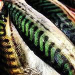 pescado_koketo_152