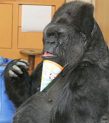 Koko's Birthday